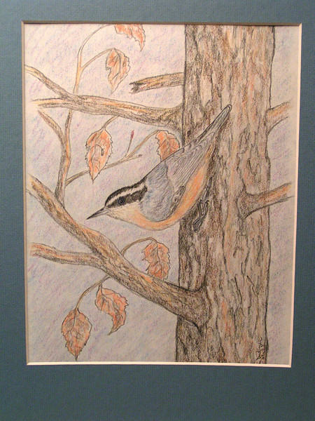 Red-breasted Nuthatch, oct 1993, color pencil, 7 5x9 5