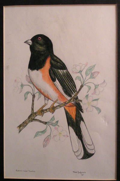 Rufous-sided Towhee, 1981, mixed media,6x8 5