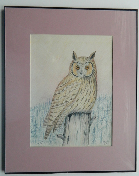 57  Long-eared Owl - color pencil, 14x10  DSCN2591s