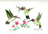 Hummingbirds with Pink Flowers
