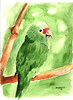 Green, Bird, Watercolor