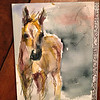 """Foal""- watercolor and pencil on arches block"