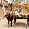 Water Buffalo Cart - Puthia, Bangladesh