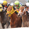 Constitution wins the 2014 Florida Derby at Gulfstream Park. Coglianese Photos/Kenny Martin