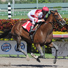 Normandy Invasion wins an Allowance Race at Gulfstream Park on February 22, 2014. Coglianese Photos