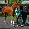 Caption: Liberated Scenes at Keeneland on Oct. 5, 2012. Keeneland Alcibiades2 image079 Photo by Anne M. Eberhardt