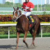 Millennia wins the 2013 TaWee Stakes. Coglianese Photos/Leslie Martin