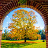 Flaming Maple Through Arch