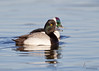 Greater Scaup (drake) and BuffleheadEast 72nd Cleveland, Ohio