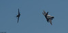 "Langley AFB F-22 Demonstration Team F-22A Raptor and the North American P-51D Mustang ""Double Trouble Two"""