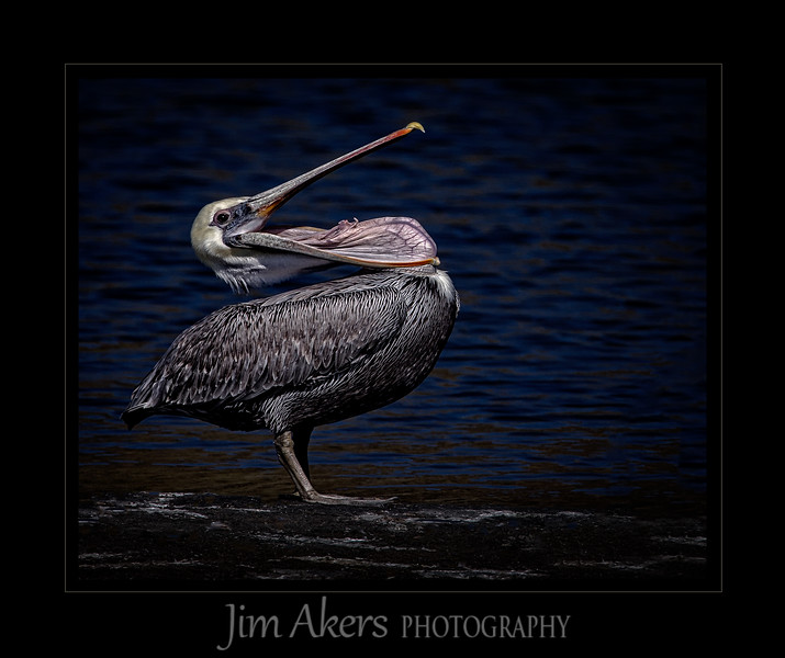 """""""They Said to Smile"""" was shot at Malibu Lagoon, Malibu CA. This photo recently was awarded BEST OF SHOW, 1ST PLACE IN ANIMAL CATEGORY, JUDGES CHOICE, AND A MERIT at the Santa Clarita Valley Photographers Assoc. Spring Print Competition."""