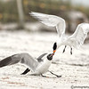 dispute with a tern