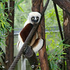 Dean, baby sifaka's father