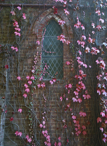 vines on church wall
