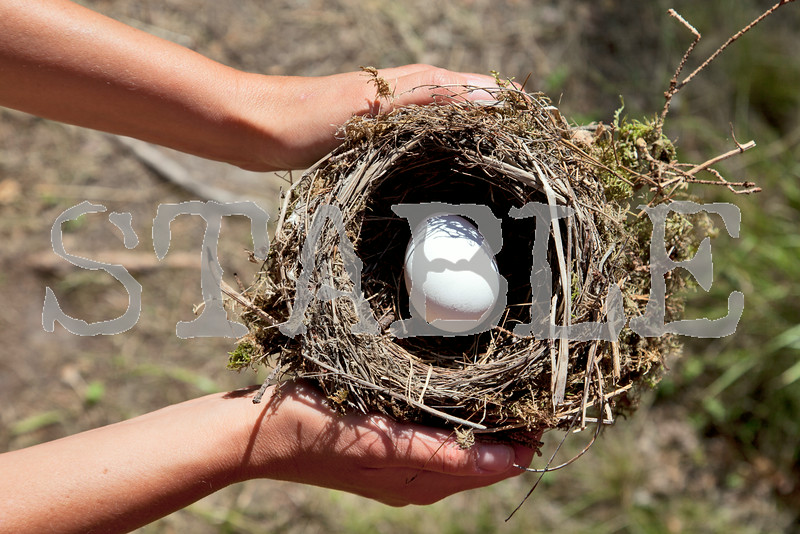 Hands holding nest with egg.