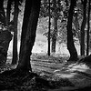 Forest in a Lovely B&W Contrast