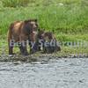 Mama Bear and Cubs, Pack Creek
