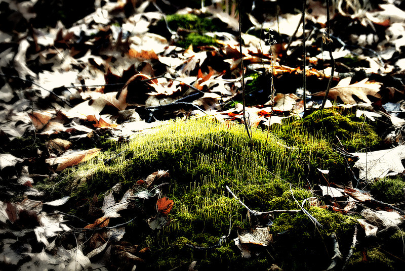 Spring Forest Floor II