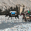 Pony train in the Markha Valley