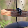 Downy Woodpecker <br /> Wildewood, California  <br /> St. Mary's County, Maryland <br /> 04/16/15