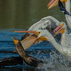 Attempted Pelican Grand Theft