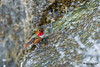 Hummingbird is bathing in waterfalls, Golden Gate Park, San Francisco, California.