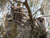 Great Horned Owl Mother and Chicks - What Is Out There? March 7, 2013 - David Hall
