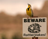Fun photo.  I got extremely close to this illusive Meadowlark at the Badlands.