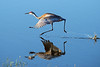 flying sandhill crane