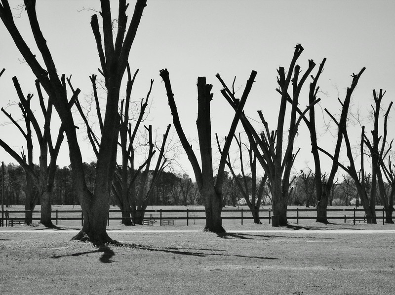 Pecan Trees - Lake Waccamaw Boys and Girls Home, NC