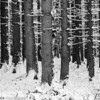 Winter forest in Raeren Belgium  Filename: NEX01574-Raeren-BE.jpg