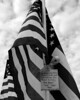 Healing Field of Honor - Naperville, Illinois - 11/10/2012 - Tag-A-Flag Event