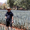 Ralph in agave field Original