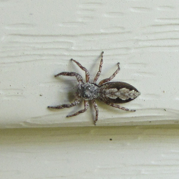 Closeup of Spider on Front Porch