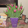 Gorgeous Tulips from Kathy and Bob