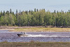 Hospital boat returning to Moosonee from Moose Factory.