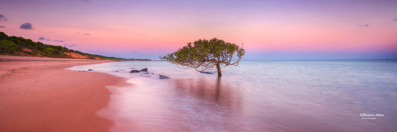 BM548025 The one Tree, Broome