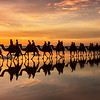 camels caravan at cable beach Broome western australia