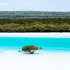 Dampier creek mangroves Broome