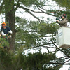 Amesbury: A worker from a tree service company lobs off a white pine limb while being filmed at 14 Unicorn Circle in Amesbury for a reality show. Bryan Eaton/Staff Photo