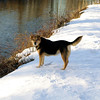 Maddie; towpath; canal; portrait; snow