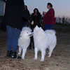 Ellie, sookie, samoyed, kingwood
