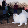 Attie, Ellie, sookie, kingwood, 2