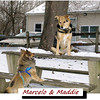 Marcelo, Maddie, FB, cover