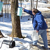 3/16/14 -- GRO_Syrup -- John Ellenberger, of Groton, checks the buckets he uses to tap sugar off his trees in order to make maple syrup. (SUN/Ashley Green)