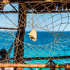 The Seashell in the Palapa