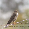 Merlin, Tehama County, CA