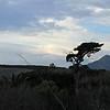 Lake Los Carneros with Santa Ynez Mountains