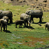 Elaphant Family Amboseli National Park Kenya Africa