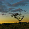 Sunrise Fly Camp At Kanzi Kenya Africa